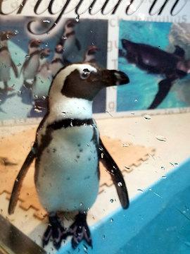 ペンギンのいるBAR.jpg
